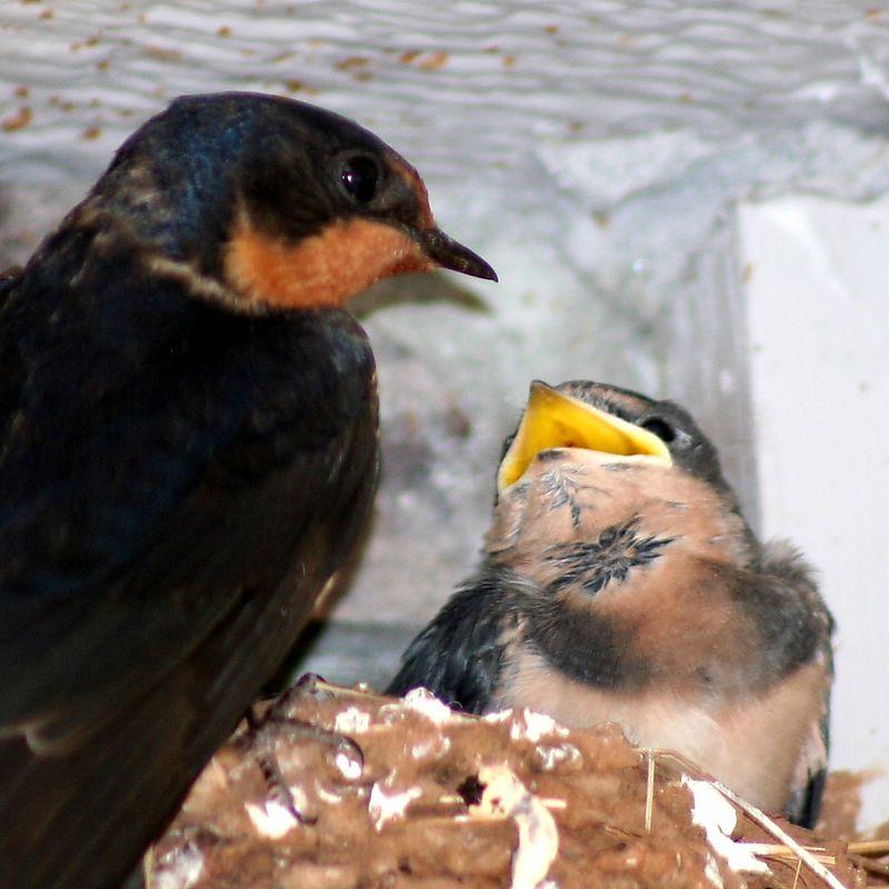 Birds 190