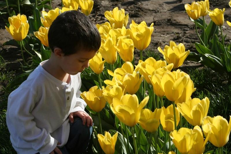 Tulip_festival_105